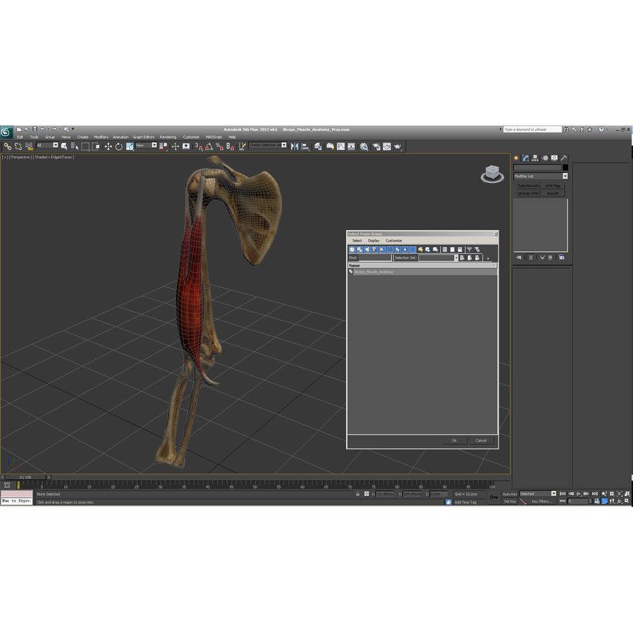 二头肌肌肉解剖 royalty-free 3d model - Preview no. 27