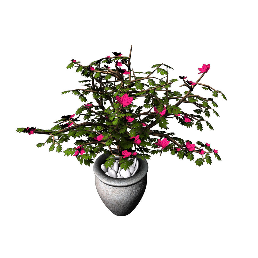 indoor plant royalty-free 3d model - Preview no. 5