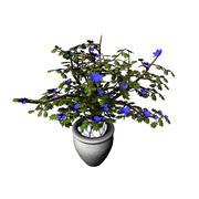 комнатное растение 3d model