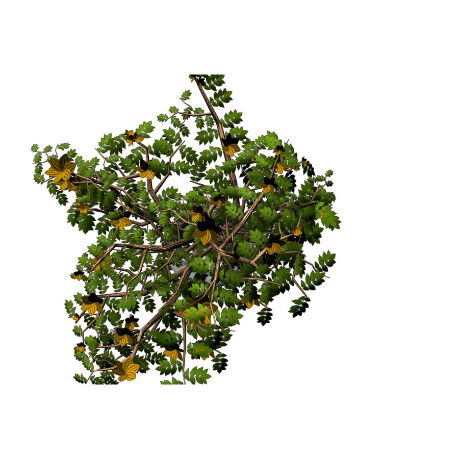 indoor plant royalty-free 3d model - Preview no. 12