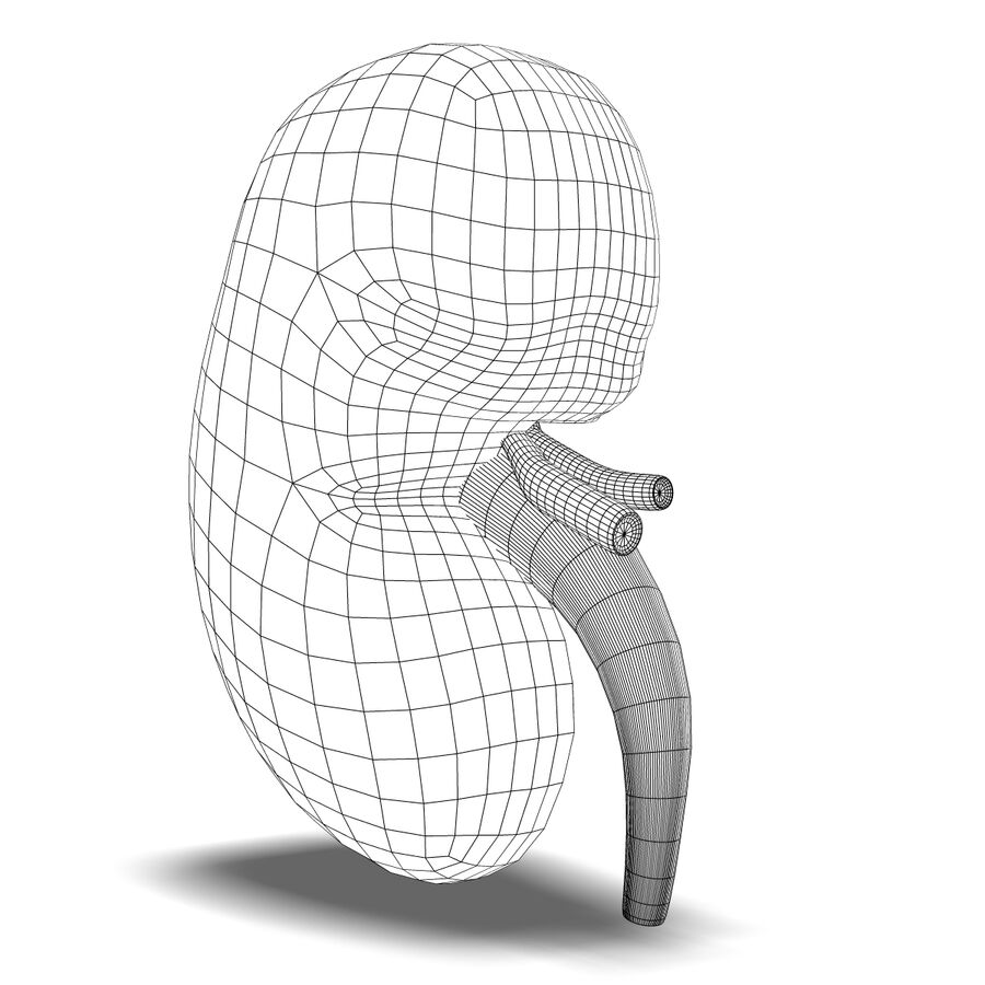 Human Kidney Anatomy royalty-free 3d model - Preview no. 8