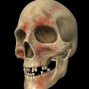 crânio desgastado da batalha 3d model