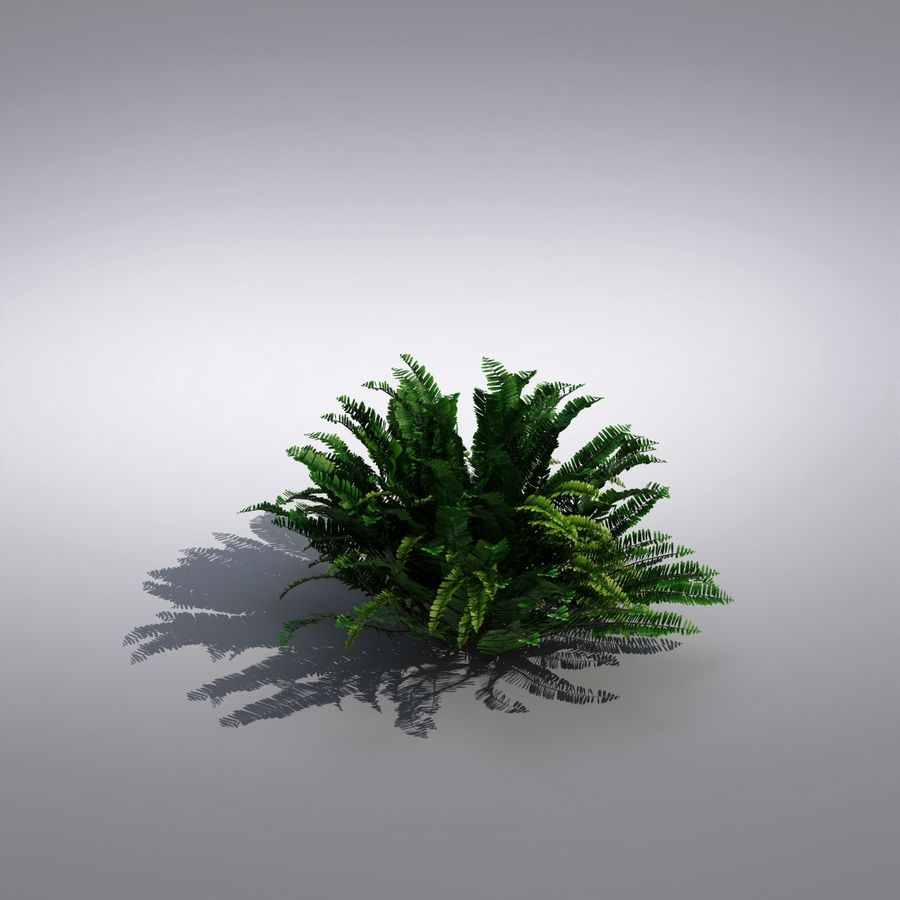 Bush Plant royalty-free 3d model - Preview no. 1
