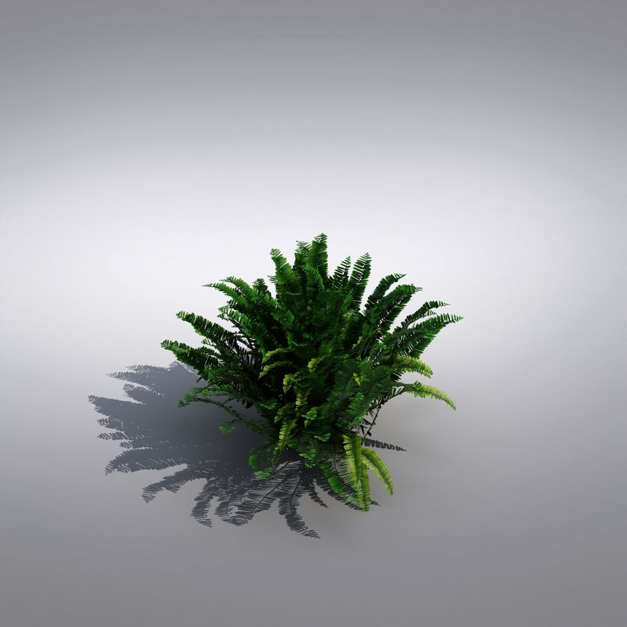 Bush Plant royalty-free 3d model - Preview no. 2