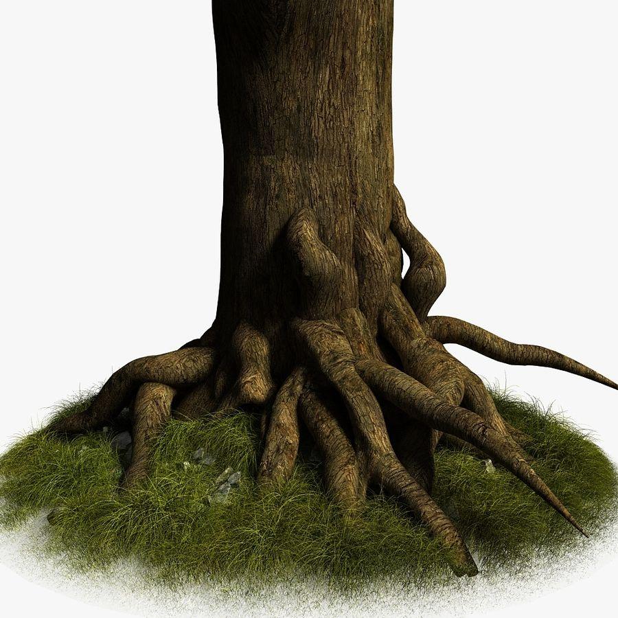 Korzenie drzew royalty-free 3d model - Preview no. 6