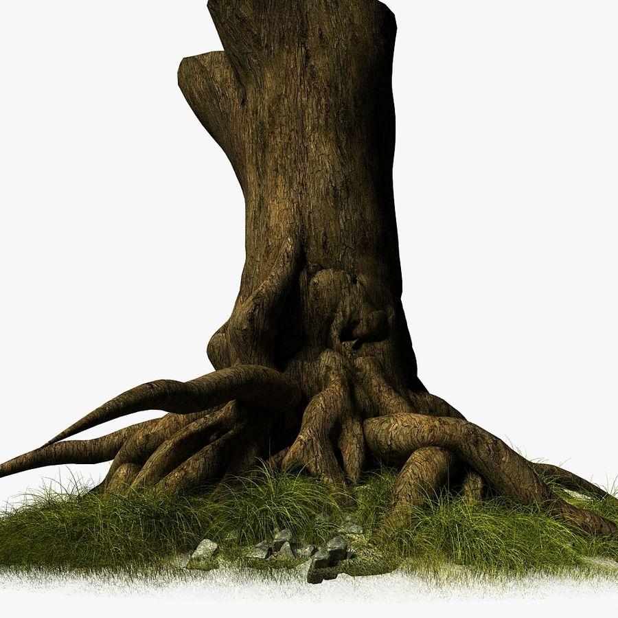 Korzenie drzew royalty-free 3d model - Preview no. 8