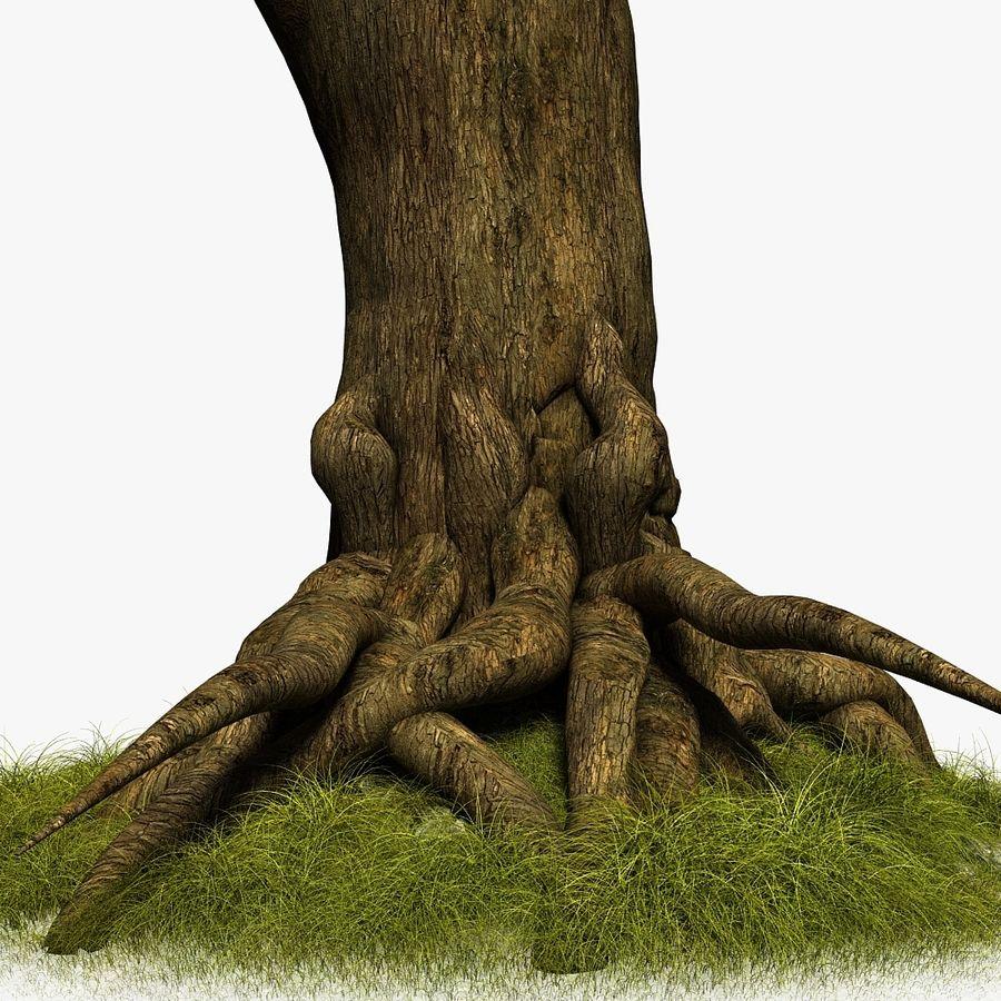Korzenie drzew royalty-free 3d model - Preview no. 3