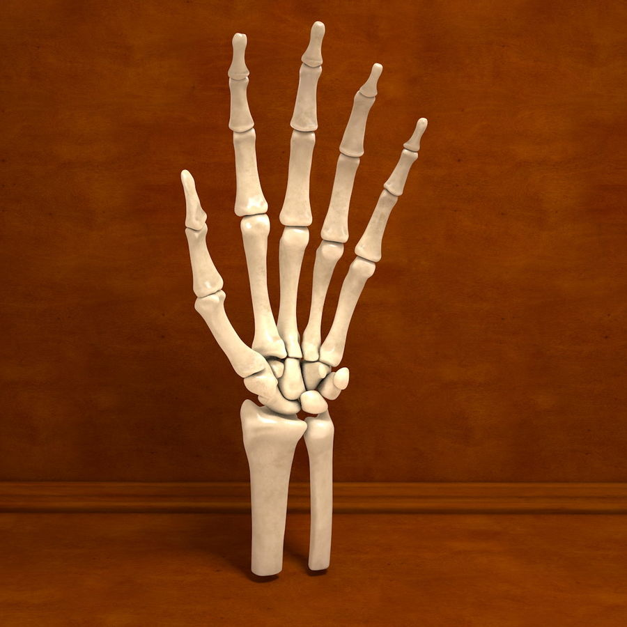 Ultimate Human Hand Bones Anatomy royalty-free 3d model - Preview no. 1