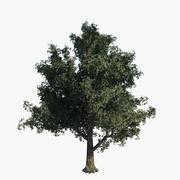 Blue Oak Tree - Game Resolution 3d model