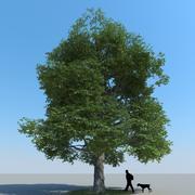 Akça Ağaç Türü 11 3d model