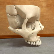 Part of the Human Skull Maxilla Anatomy 3d model
