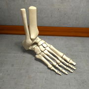 Ultimate Human Foot Bones 3d model
