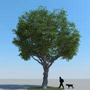 Maple Tree Type 09 3d model