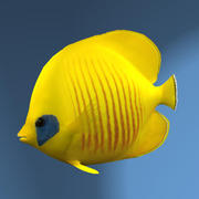 Bluecheek Butterfly Fish 3d model