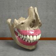 Ludzkie zęby z anatomią szczęki i dziąseł 3d model