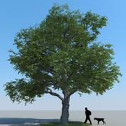 Typ drzewa klonowego 10 3d model