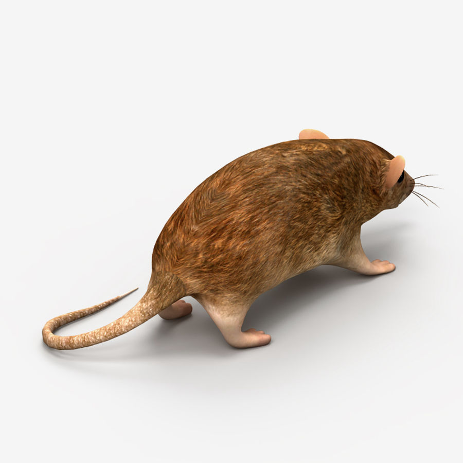 Rat Mouse royalty-free 3d model - Preview no. 5