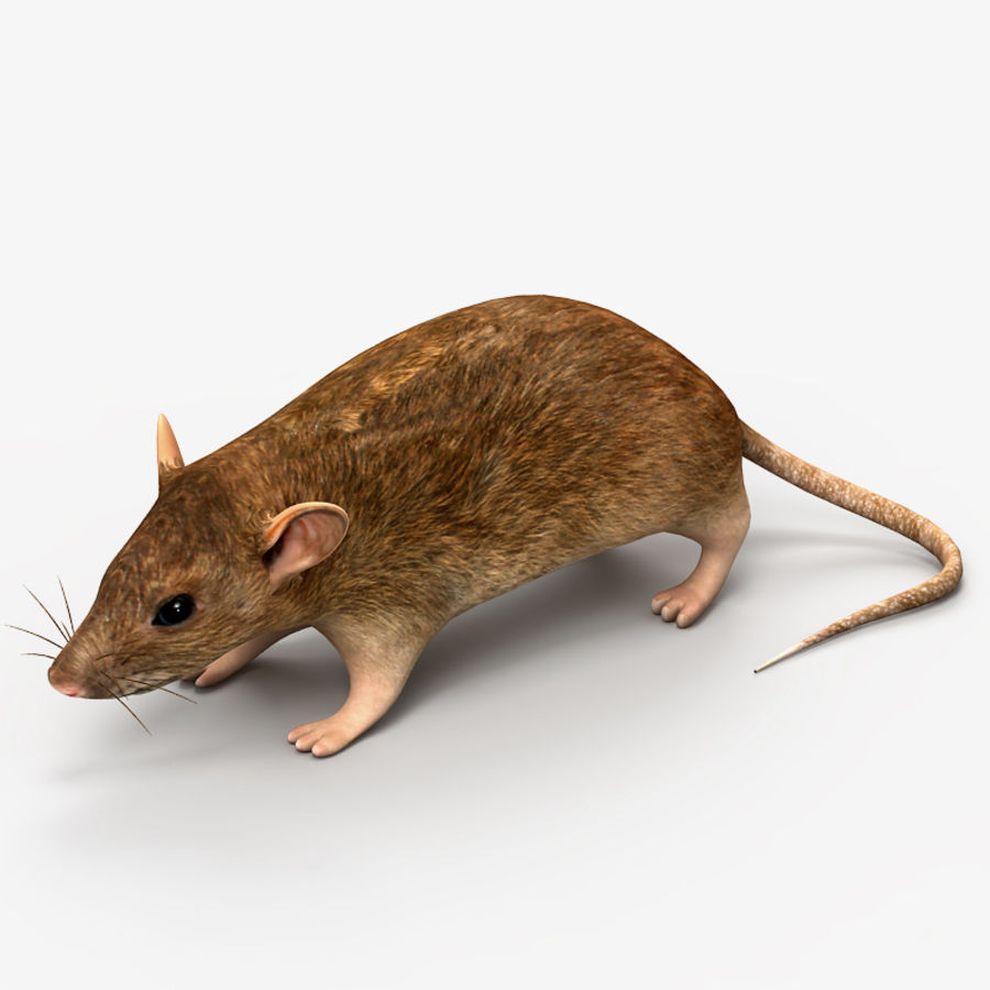 Rat Mouse royalty-free 3d model - Preview no. 1