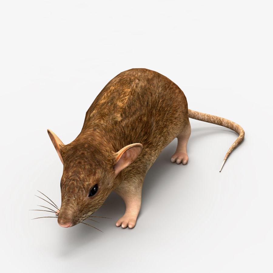 Rat Mouse royalty-free 3d model - Preview no. 2