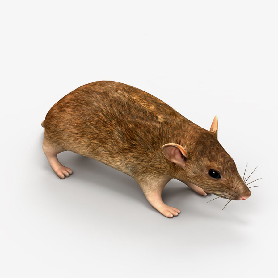 Rat Mouse royalty-free 3d model - Preview no. 4