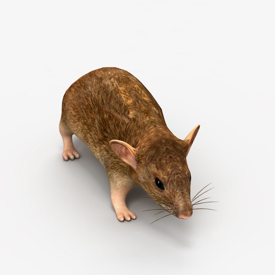 Rat Mouse royalty-free 3d model - Preview no. 3
