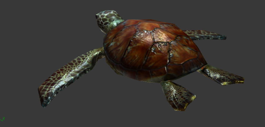 tortuga marina royalty-free modelo 3d - Preview no. 2