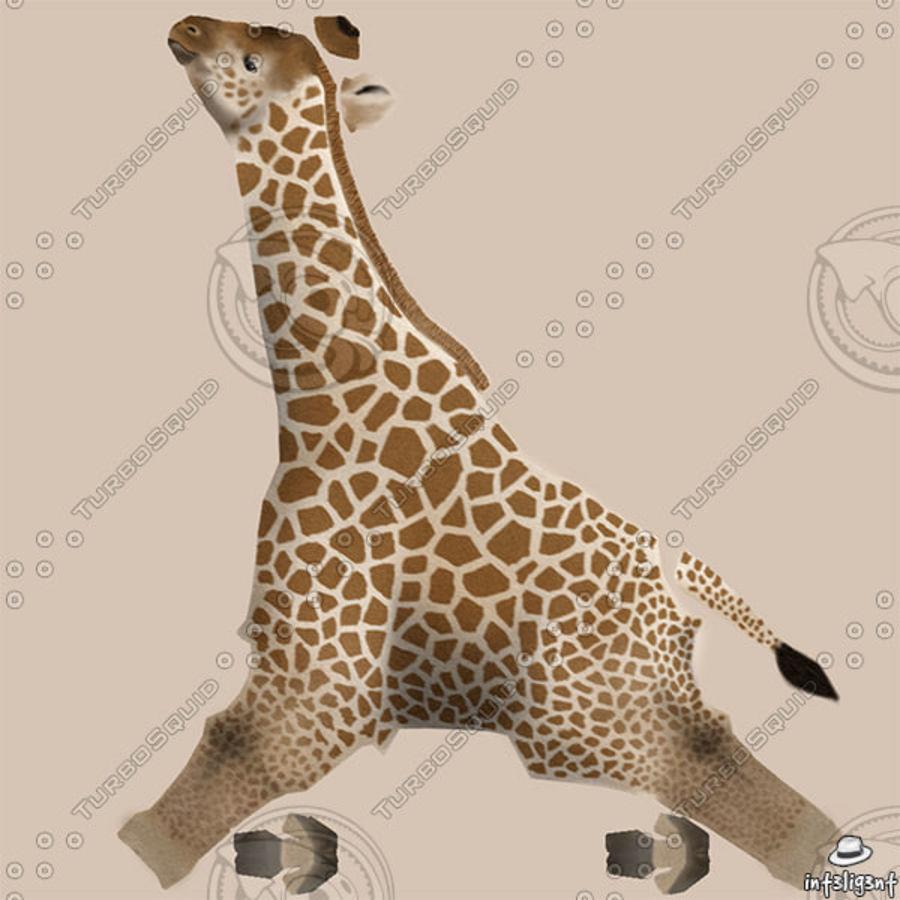 长颈鹿 royalty-free 3d model - Preview no. 10