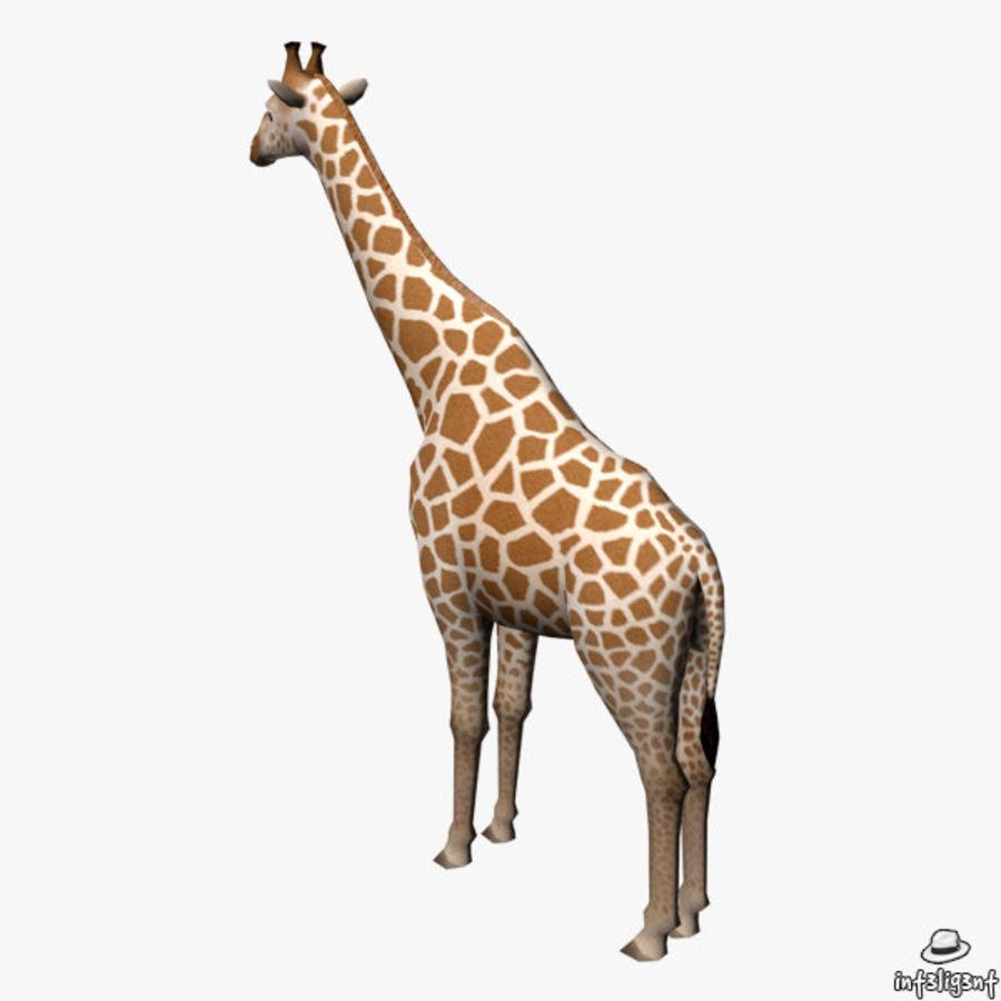 长颈鹿 royalty-free 3d model - Preview no. 5