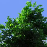 Ultra Photorealistic Huge Tree 3d model