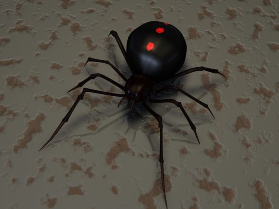 Spider- Black-Widow royalty-free 3d model - Preview no. 2