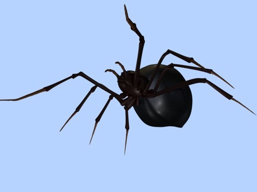 Spider- Black-Widow royalty-free 3d model - Preview no. 5