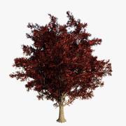 赤いカエデの木-ゲームの解像度 3d model