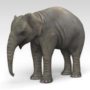 Elephant Calf 3d model