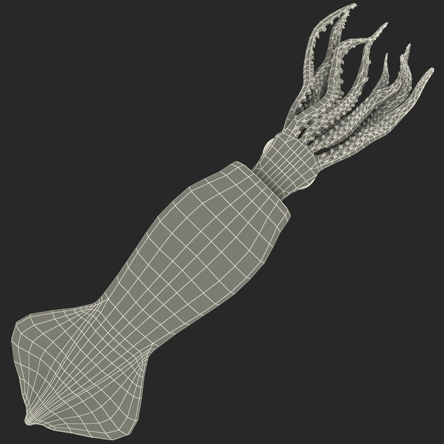 Fresh Squid royalty-free 3d model - Preview no. 20