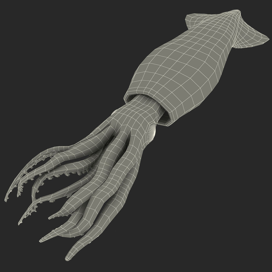 Fresh Squid royalty-free 3d model - Preview no. 15