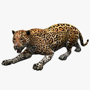 Jaguar Pose 3 3d model