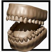 Teeth and Tongue 3d model