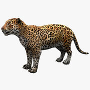 Jaguar Rigged 3d model