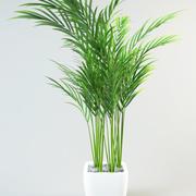 palmier en pot 3d model