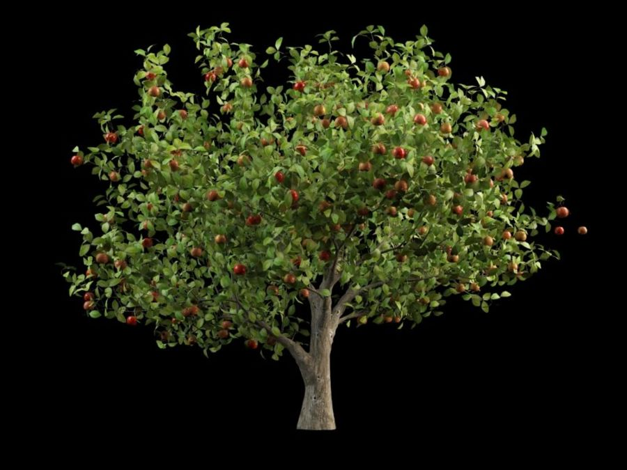 malus apple tree crabapples royalty-free 3d model - Preview no. 3