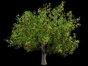 malus apple tree crabapples 3d model