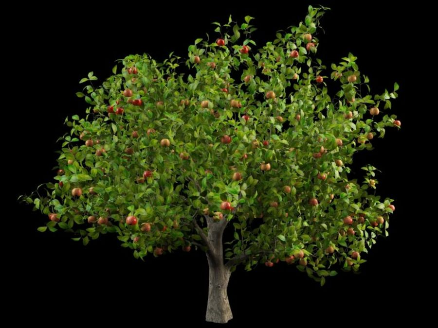 malus apple tree crabapples royalty-free 3d model - Preview no. 1