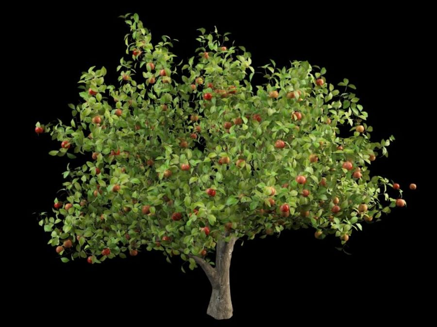 malus apple tree crabapples royalty-free 3d model - Preview no. 2