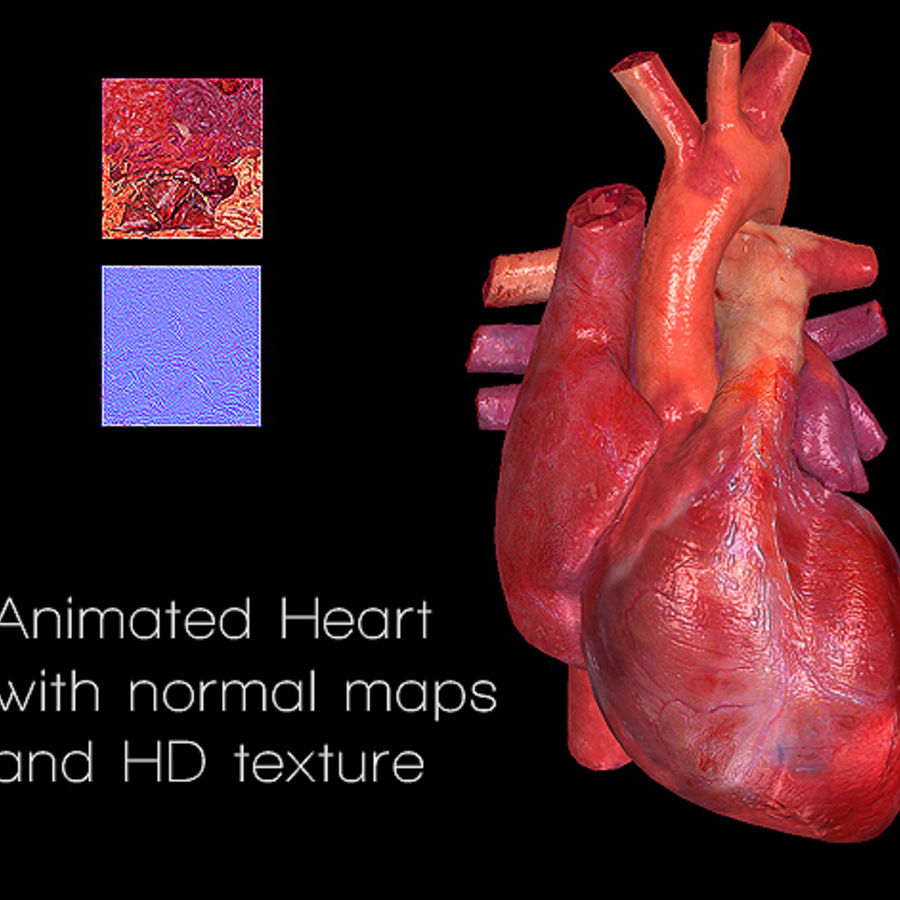 Heart Animated 3D Model $25 - .oth .3ds .obj .dxf .fbx .c4d - Free3D