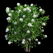 viburnum opulus guelder rose modelo 3d