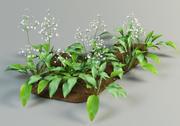 alisma plantago mad-dog weed 3d model