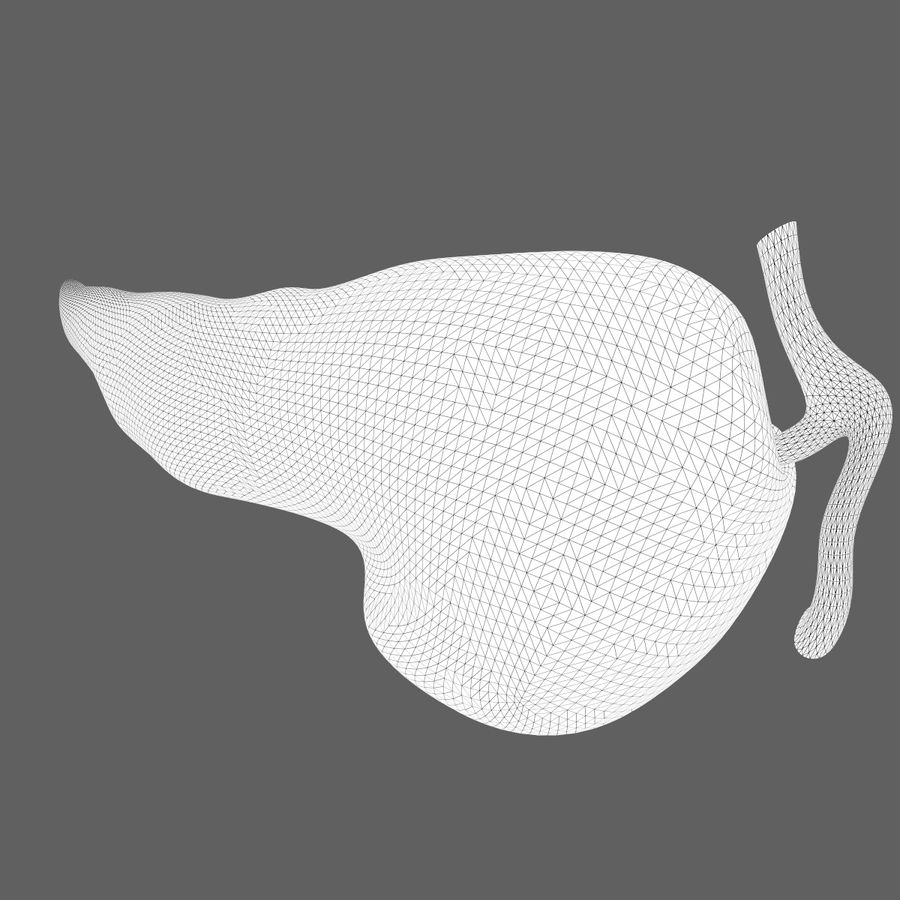 Pancreas Anatomy royalty-free 3d model - Preview no. 7
