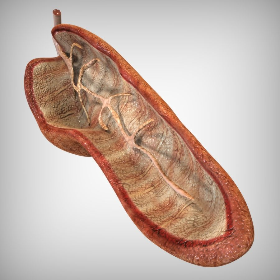 Pancreas Anatomy royalty-free 3d model - Preview no. 3