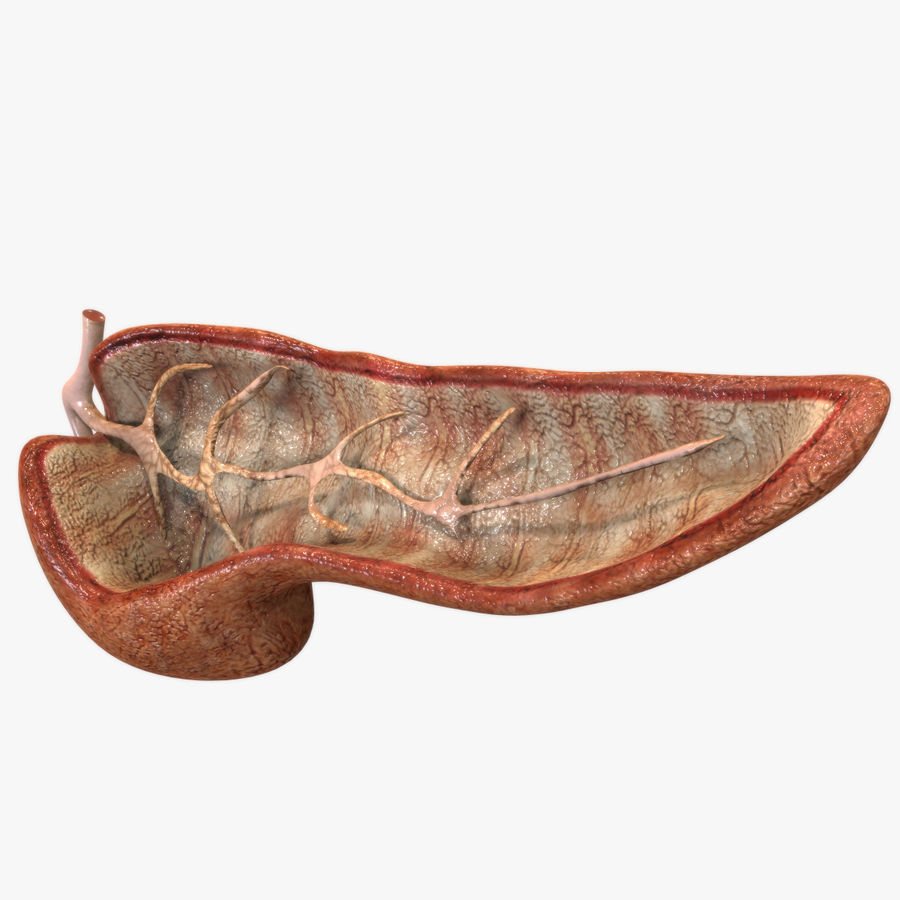 Pancreas Anatomy royalty-free 3d model - Preview no. 1
