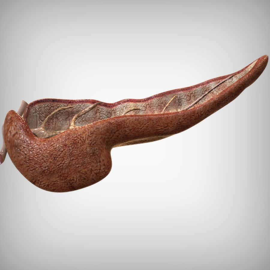 Pancreas Anatomy royalty-free 3d model - Preview no. 5